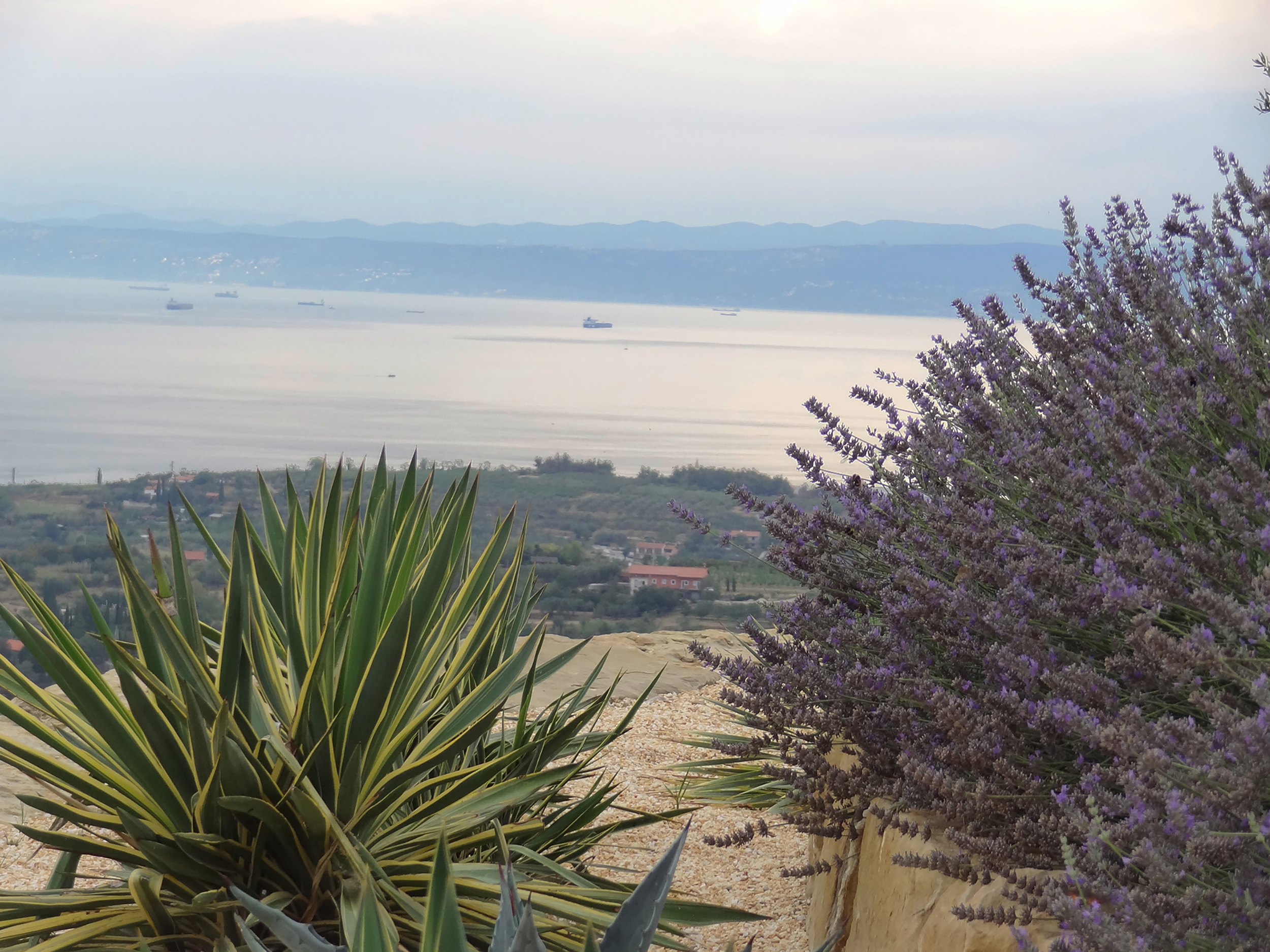 izola vrt garden morje sea razgled view rocks skale
