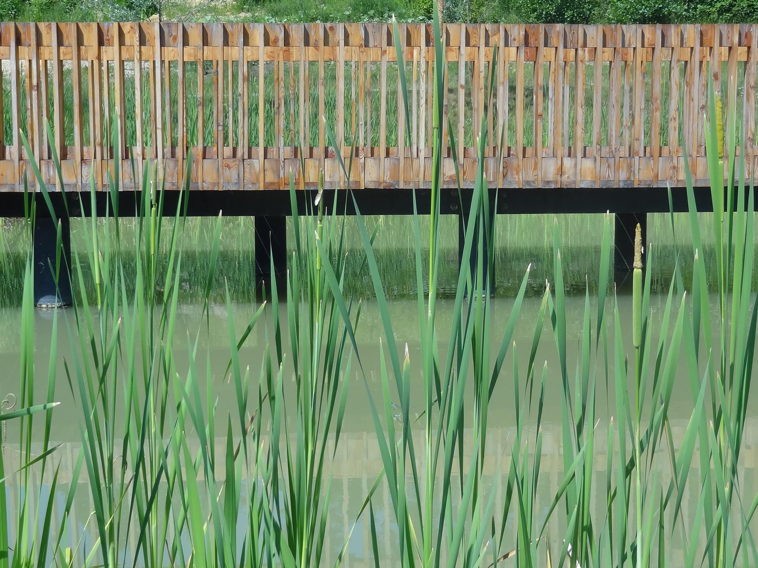 bruto soseska brdo ljubljana housing landscape bajer pond orchard sadovnjak