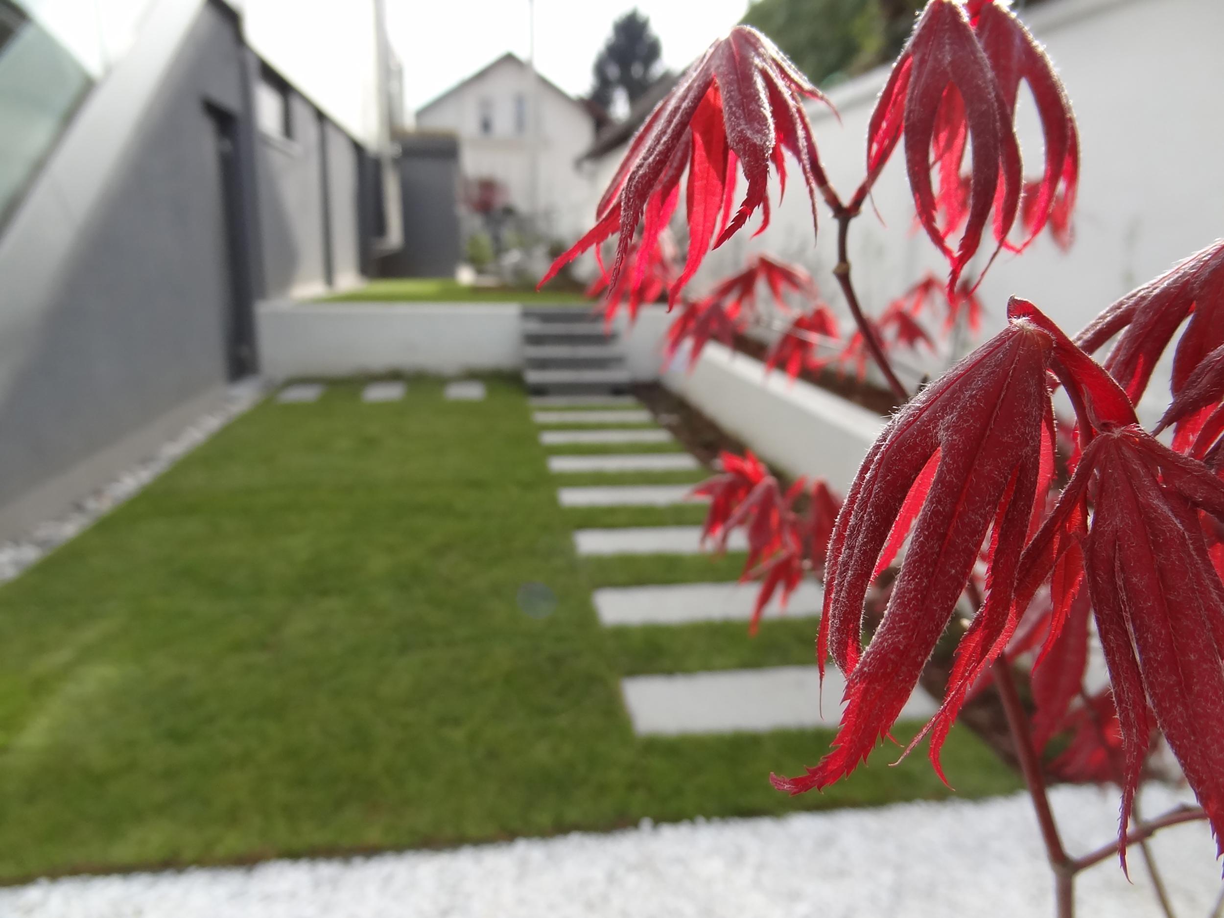 rozna ljubljana vrt garden mah moss