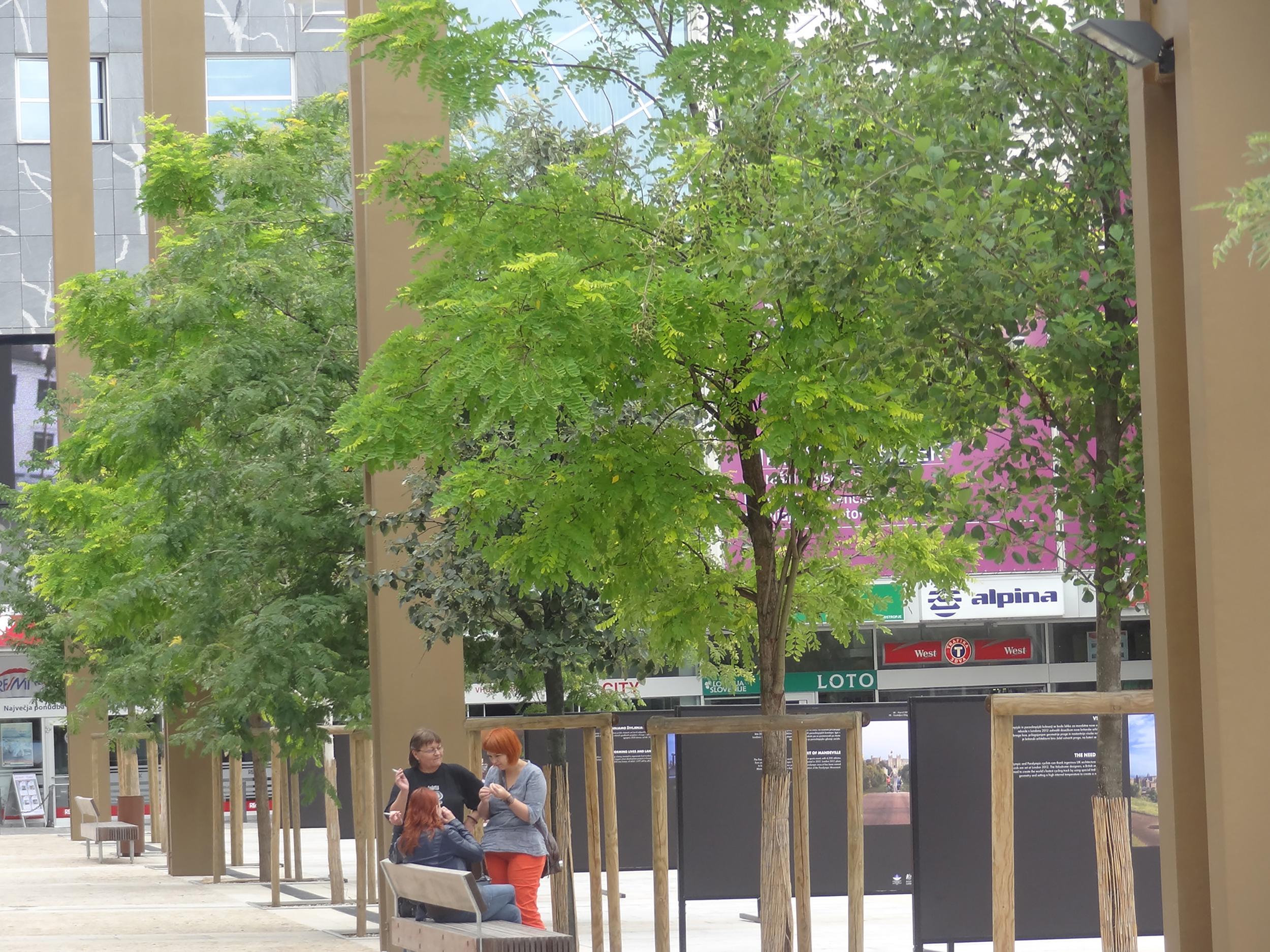 trg leon stukelj maribor bruto square urban tree line drevored