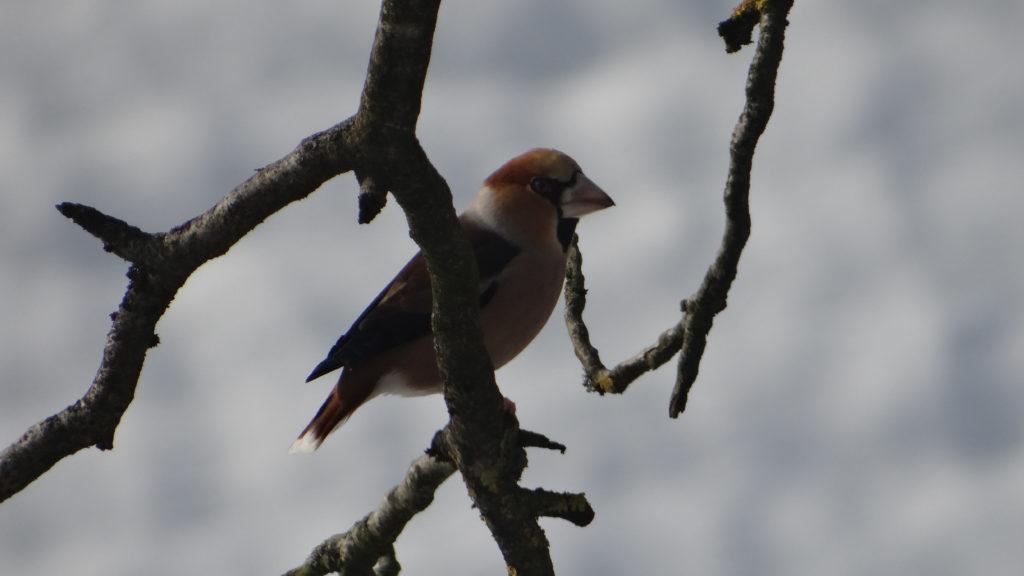 bruto ikea ljubljana eko eco ptice modularni sistem modular system birds totem