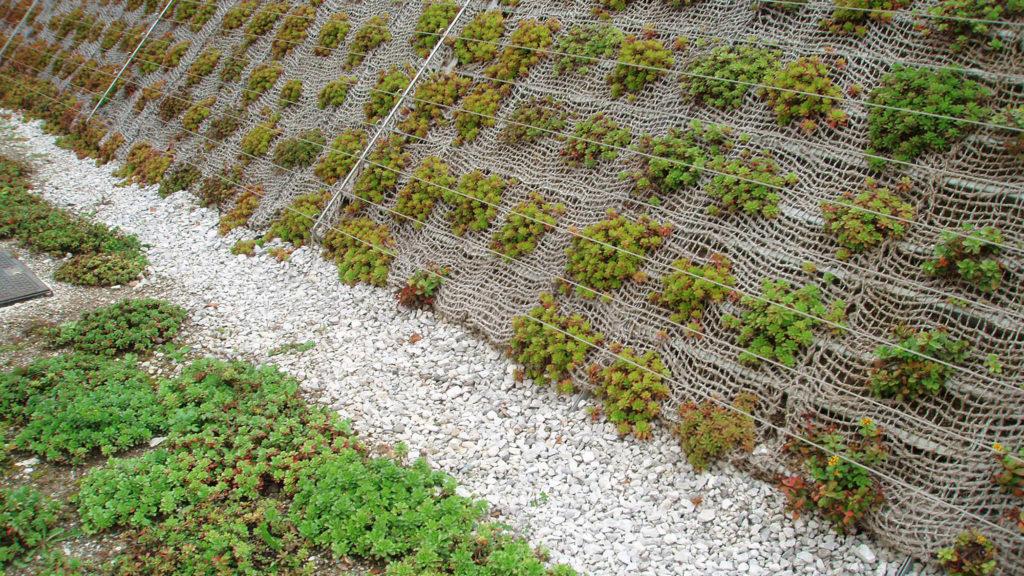 bruto olimia sotelia podčetrtek hotel green roof zelena streha