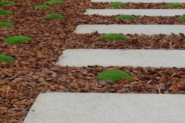 bruto rozna ljubljana vrt garden moss mah