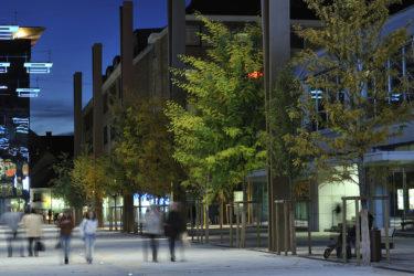 bruto maribor trg leona štuklja leo stukelj square tree line drevored